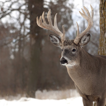 Must-Know Tips for Beating Buck Fever