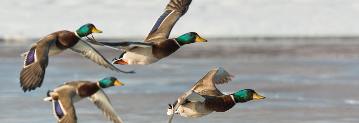 Reviewed: Best Waterfowl Load on the Market
