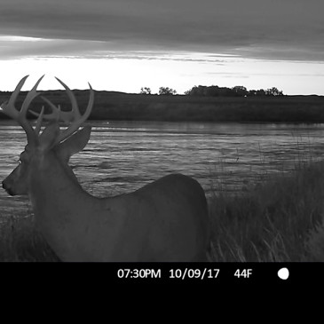 Revealed: Top Trail Cam Tricks