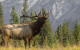 elk hunt lead